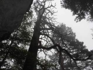 Randonnées naturalistes