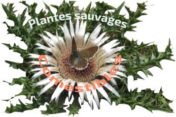Plantes_sauvages-copie